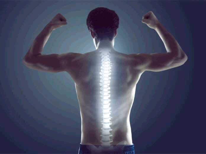 things you didn't know about the spinal cord
